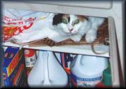 Being a pest in the cupboard